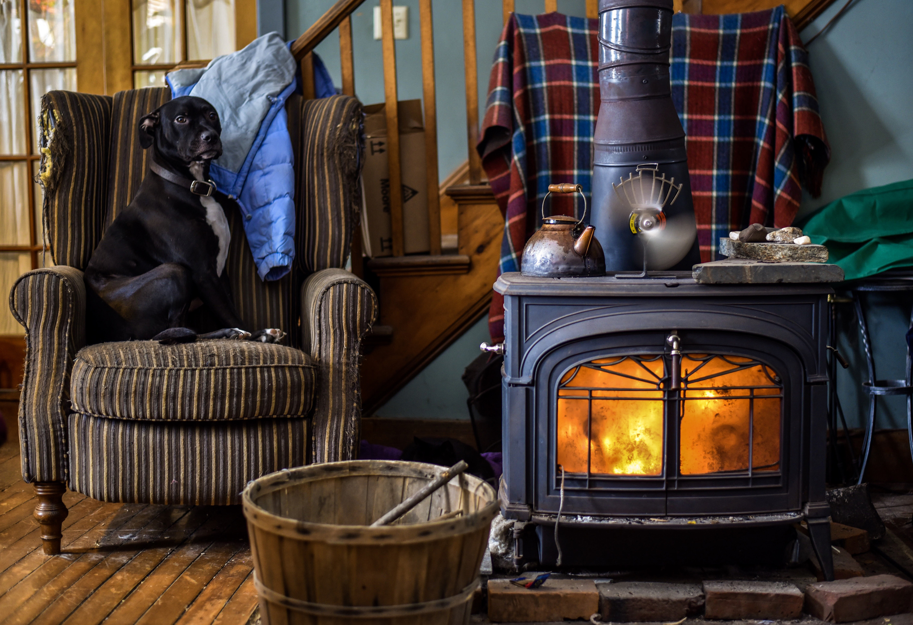 Dog sitting on chair in cabin location with wood stove