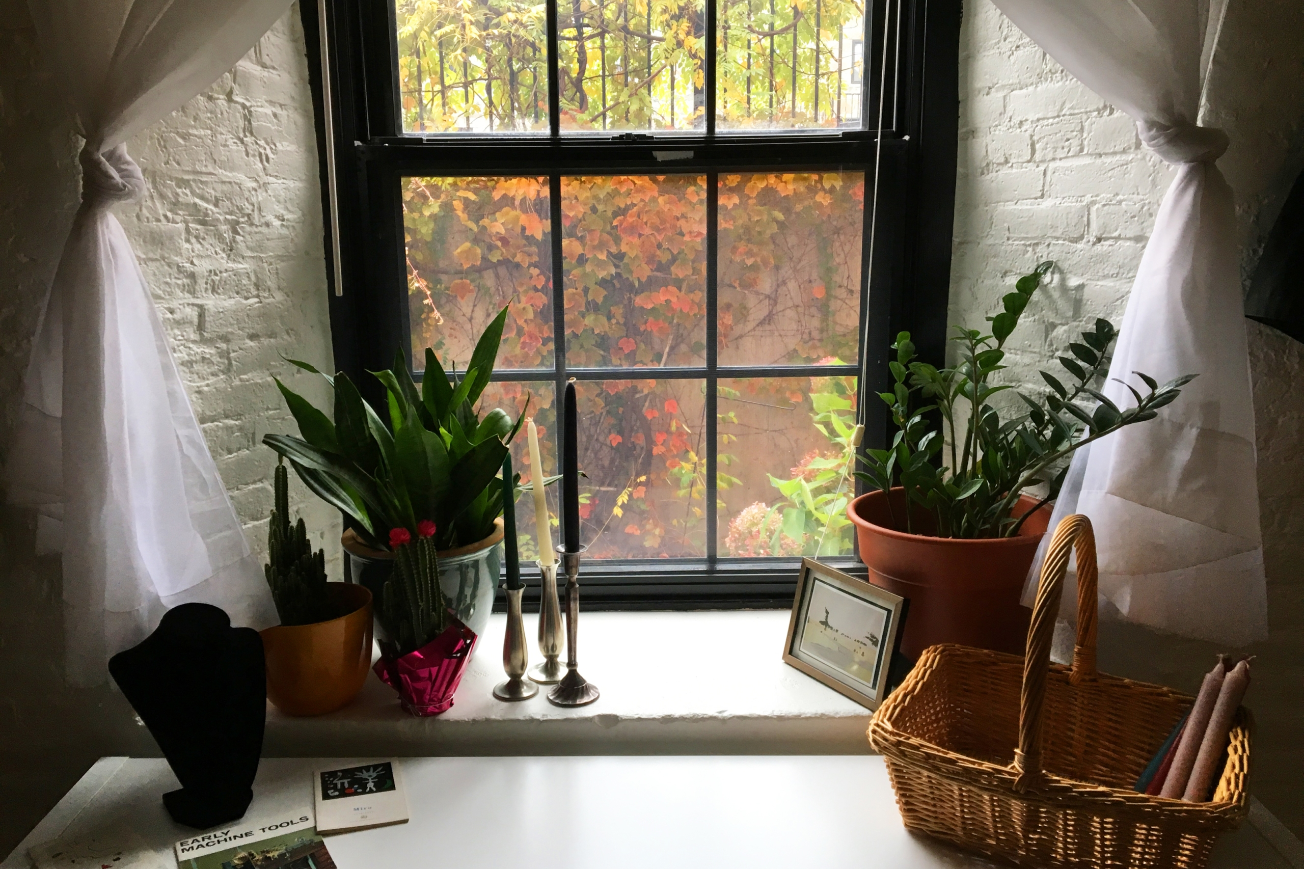 Decorated white window sill looking out to fall foliage