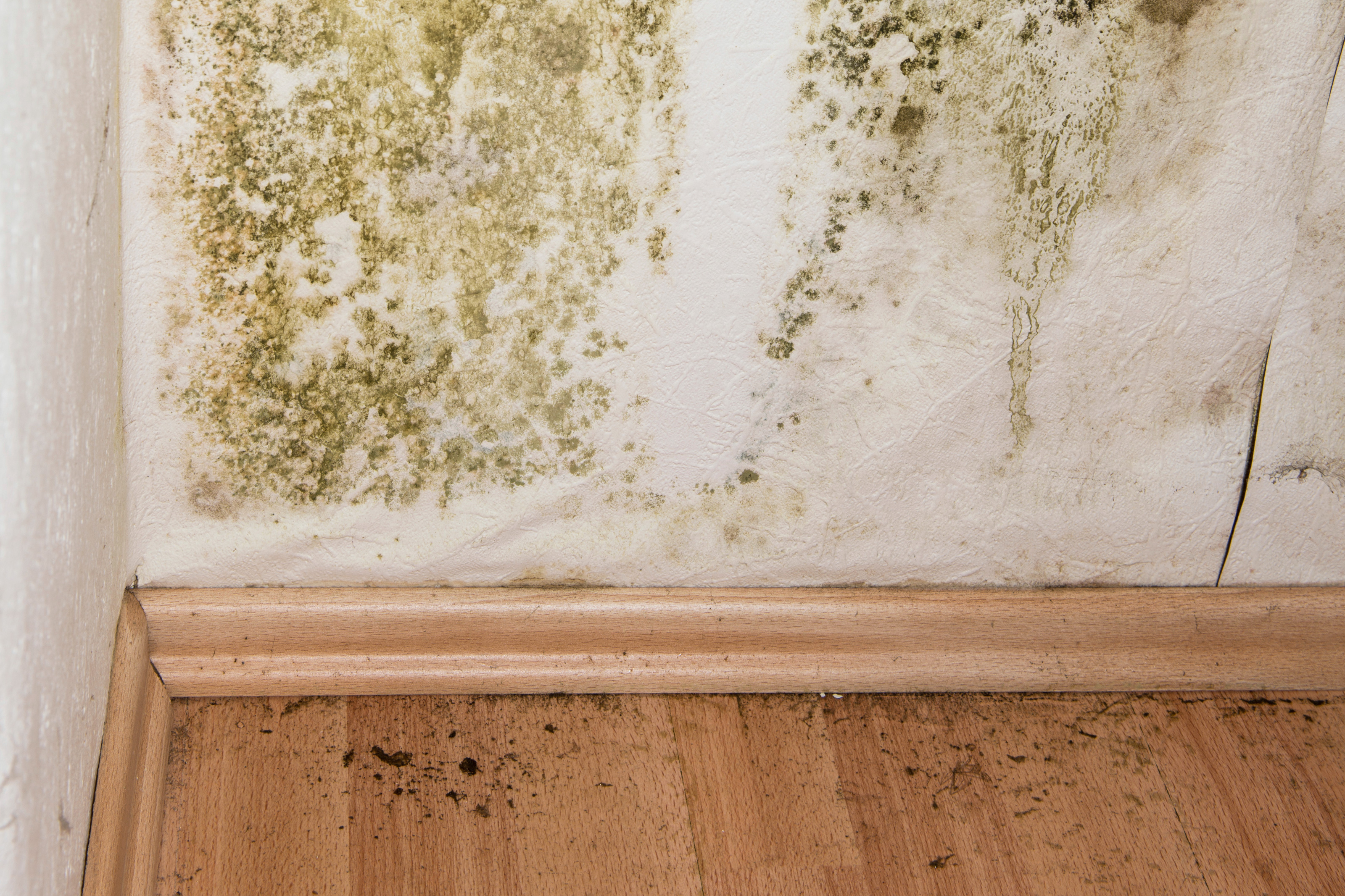 Mold on an interior wall of a home