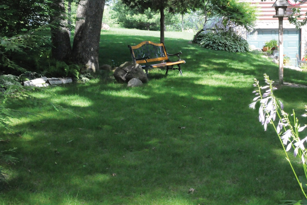 No Mow grass mix in yard