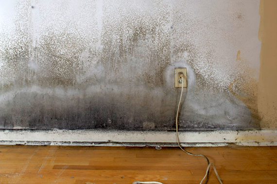 Does Home Owners Insurance Cover Mold | Moldy House