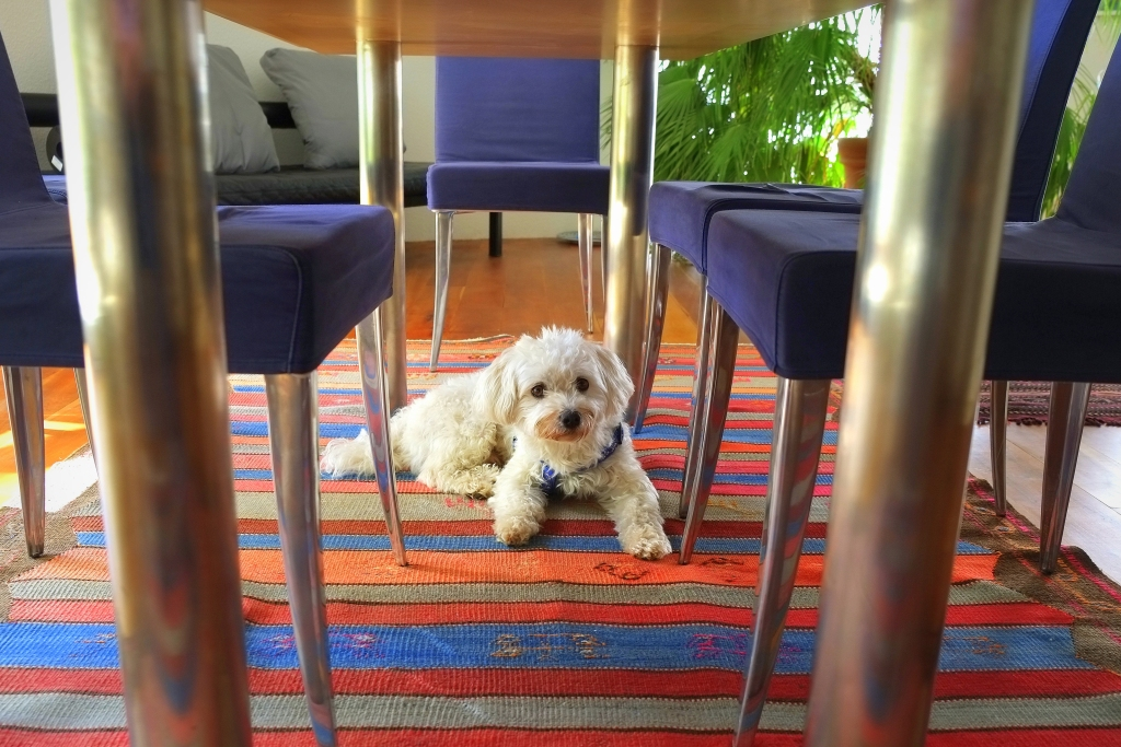 Dog sitting on colorful striped rug
