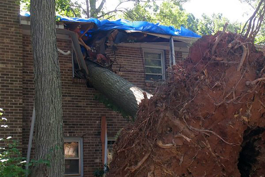 fallen tree responsibility