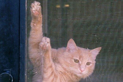 Cat ripping screen