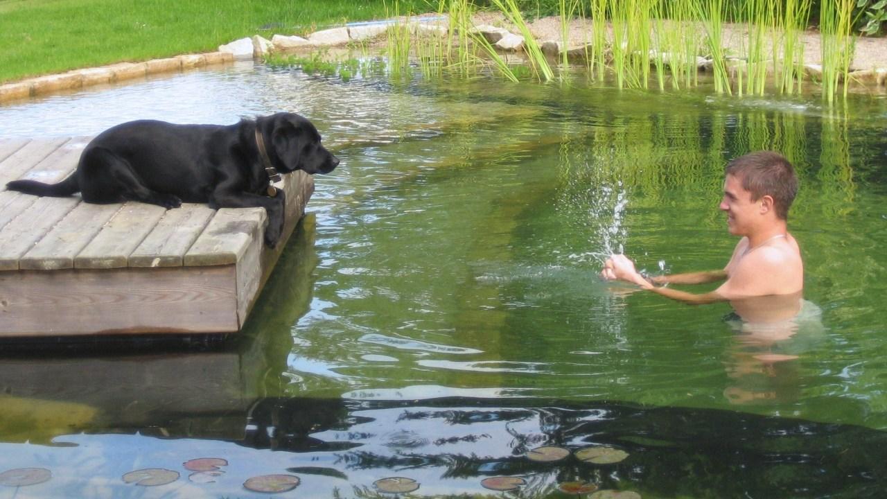 Natural Swimming Pools | All Natural Swimming Pool | HouseLogic