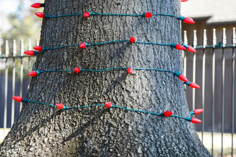 Tree trunk outside wrapped in red Christmas lights