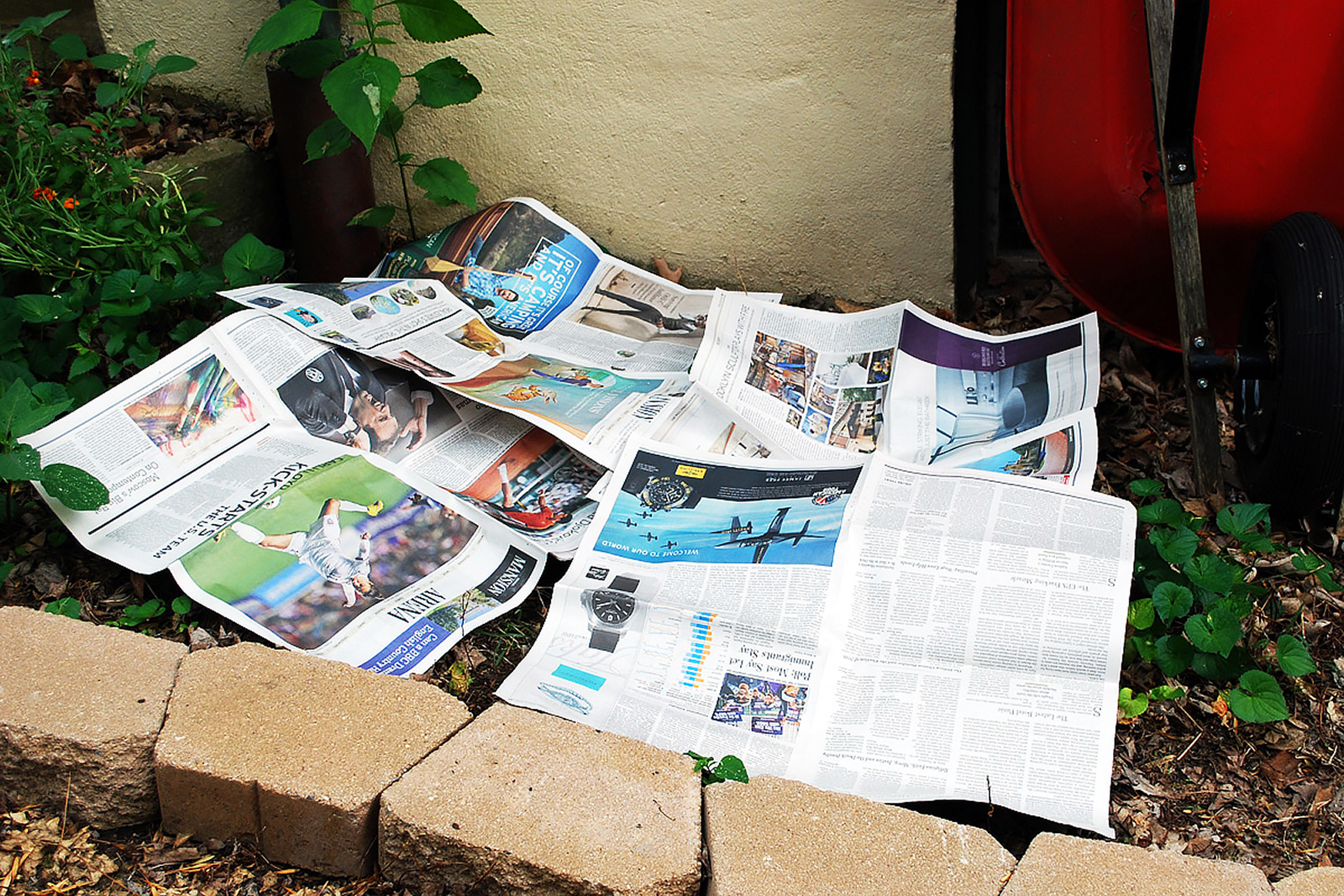 Newspapers on a flower bed to combat weeds