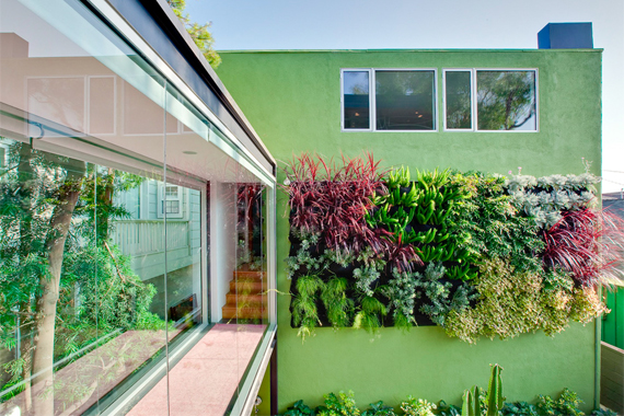 Vertical Living Wall Garden on a Vertical Wall | Living Wall