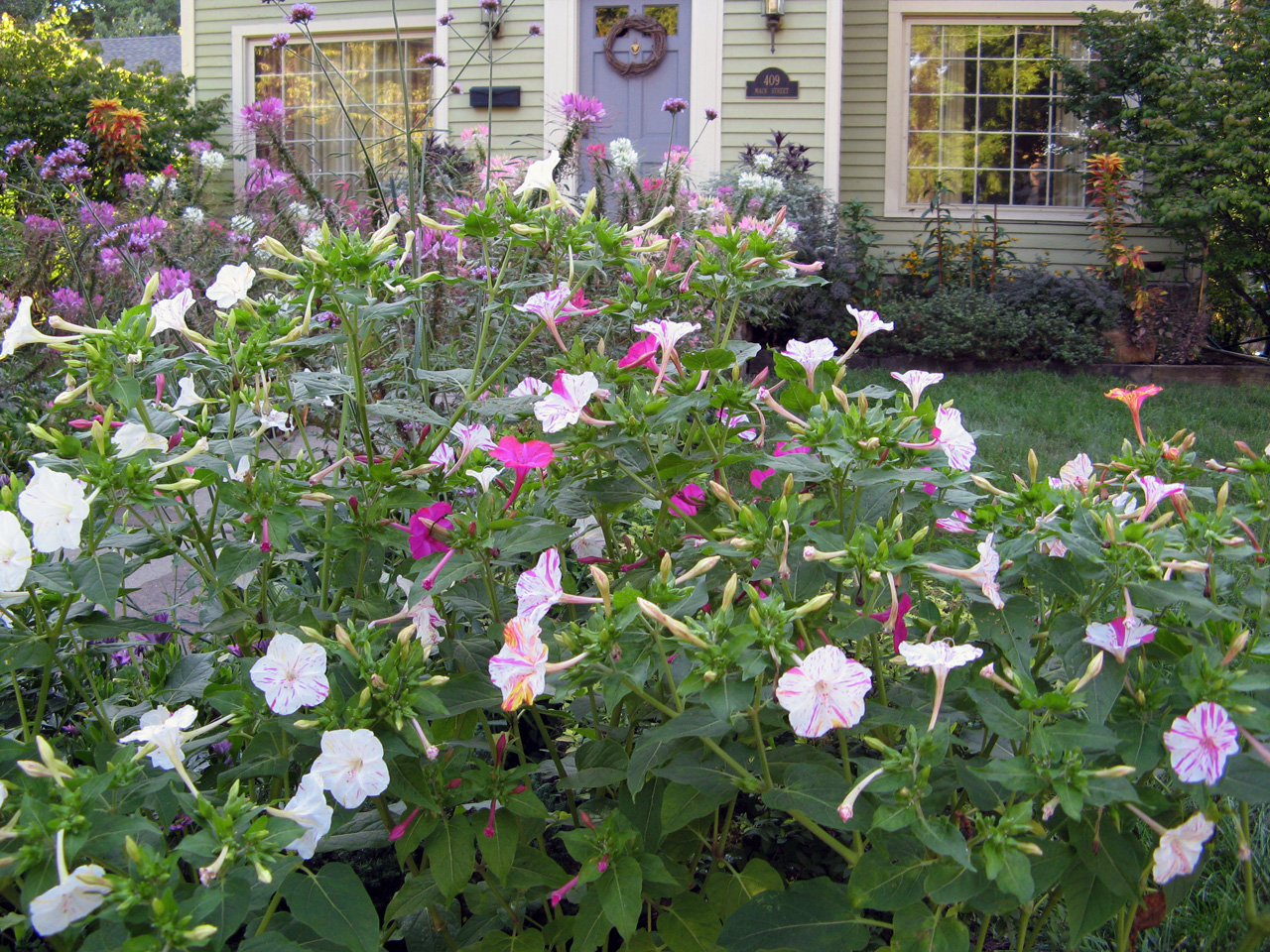 Drought Tolerant Plants With Great Curb Appeal Houselogic