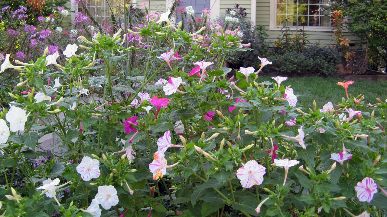 Drought Tolerant Plants With Great Curb Appeal | HouseLogic