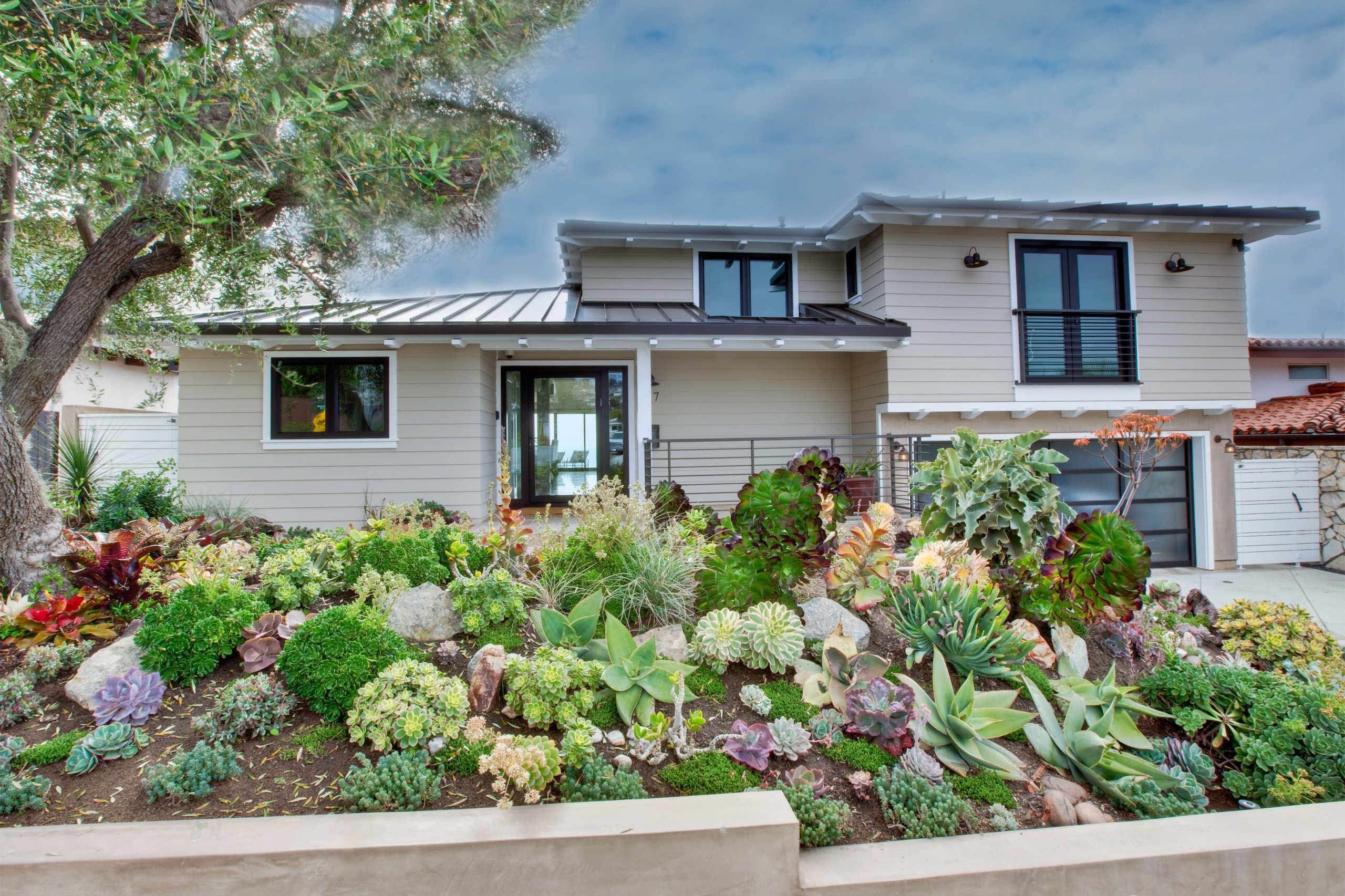 Drought-tolerant plants in a front yard