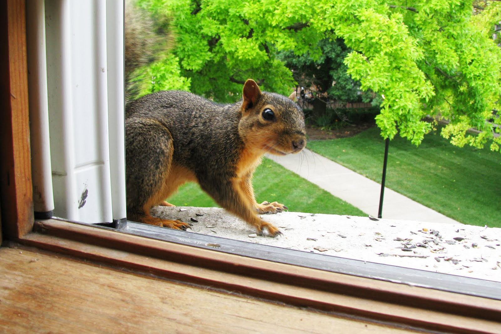 How To Get Rid Of Squirrels In Attics