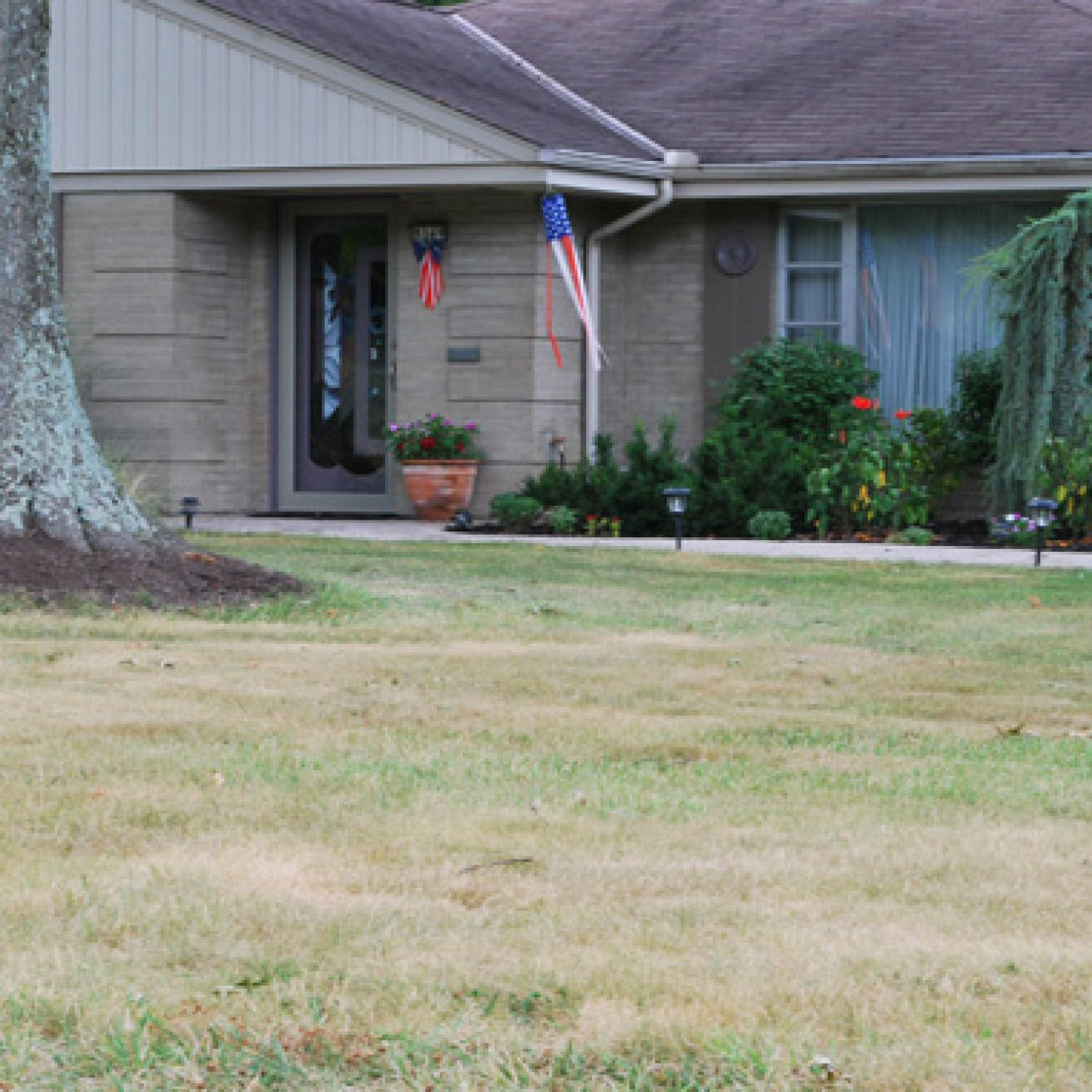 Brown grass in a front lawn