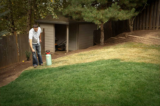 Some homeowners are using lawn paint during the drought