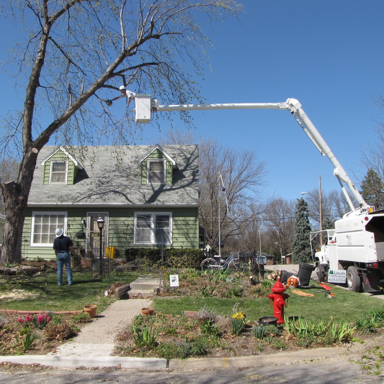 Silver Maple | Bad Trees | Tree Choices for the Yard