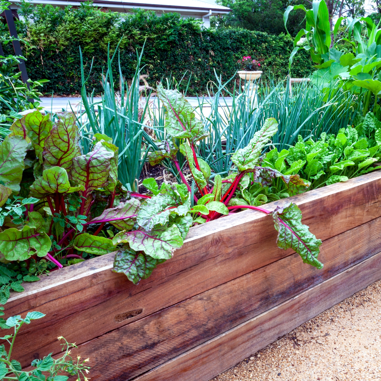 Raised planting bed lush with greenery