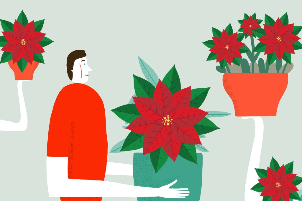 Flat color illustration of man surrounded by poinsettias