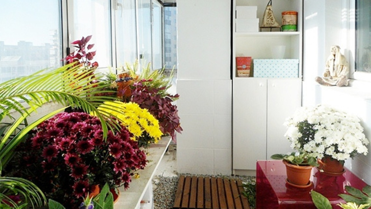 Plants That Clean the Air in Your Home   HouseLogic