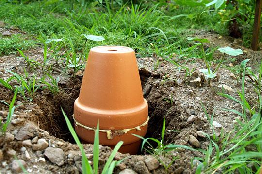 Garden Watering Systems Diy System Gardening