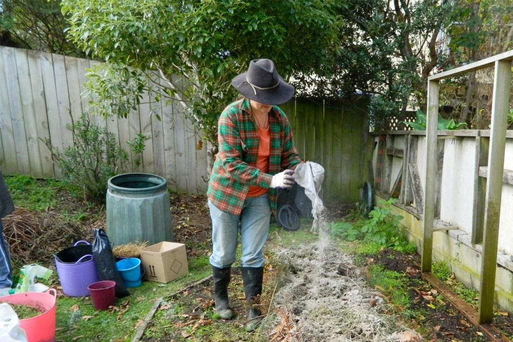 Spreading wood ash fertilizer in a home garden