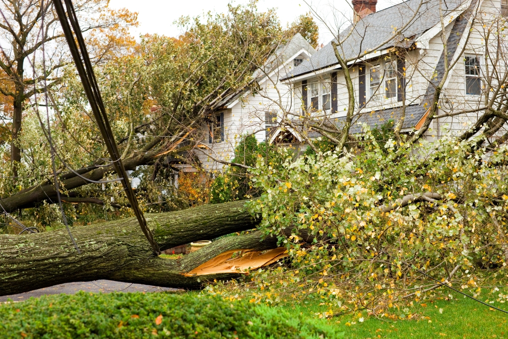 Trees toppled against white two-story homes following storm