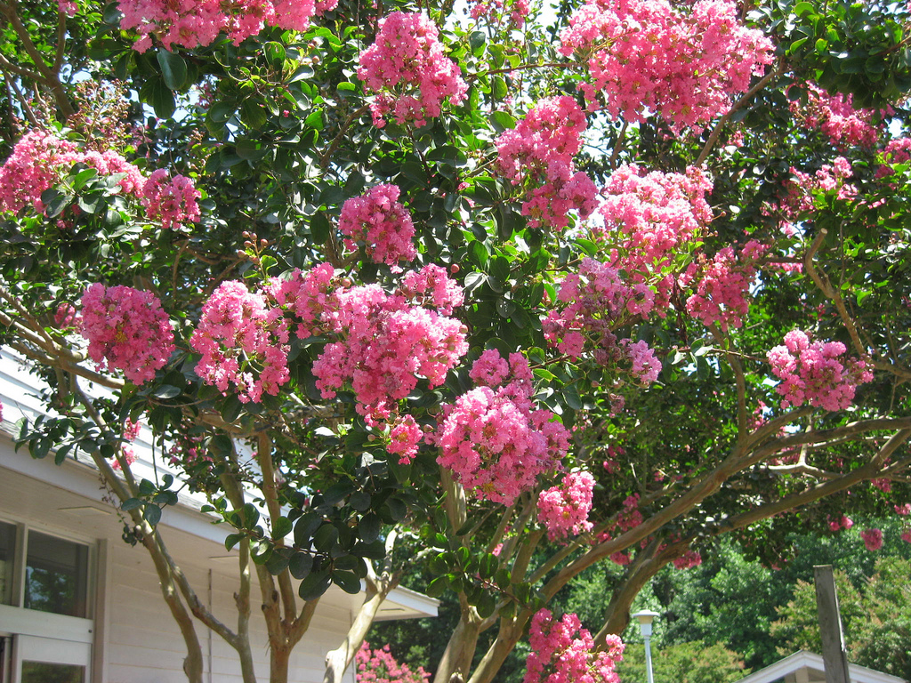 Best Trees To Plant Trees For Landscaping Houselogic Yard Tips