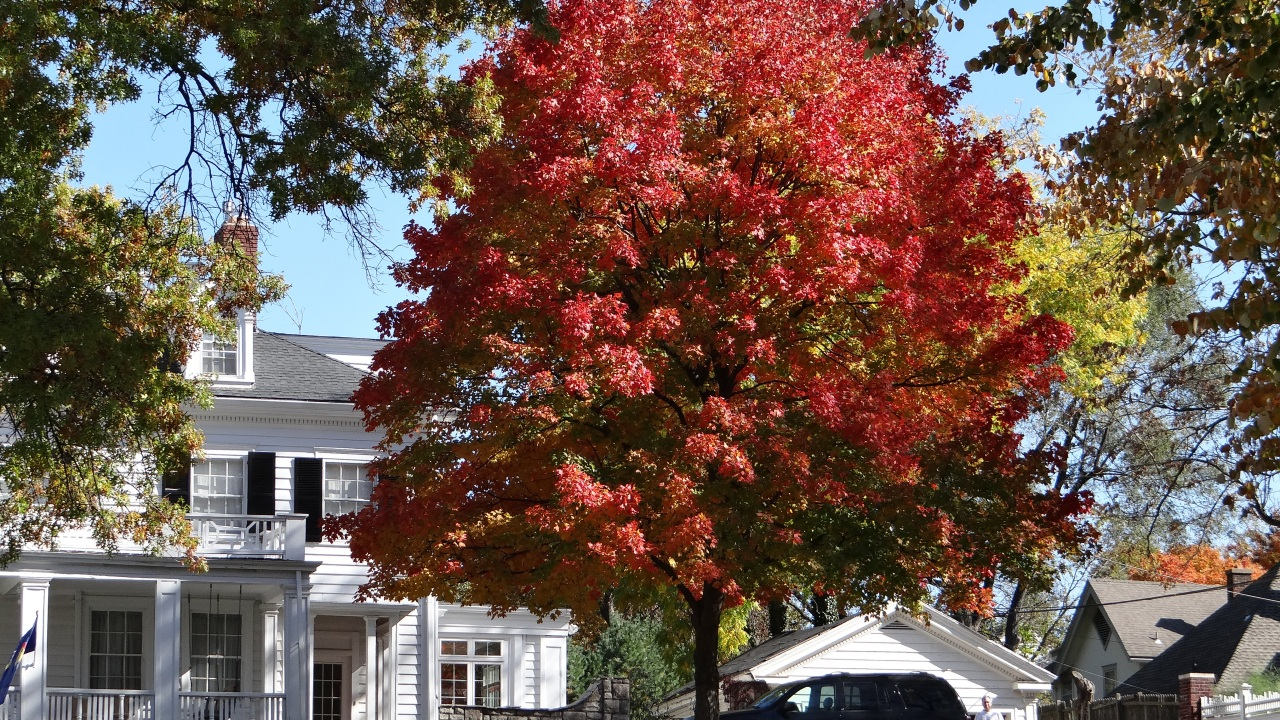 Best Trees to Plant | Trees for Landscaping | HouseLogic Yard Tips on www.tree house, trees next to foundation, small tree next to house, small hedge next to house, trees in redmond, trees lake house, trees to plant next to house,