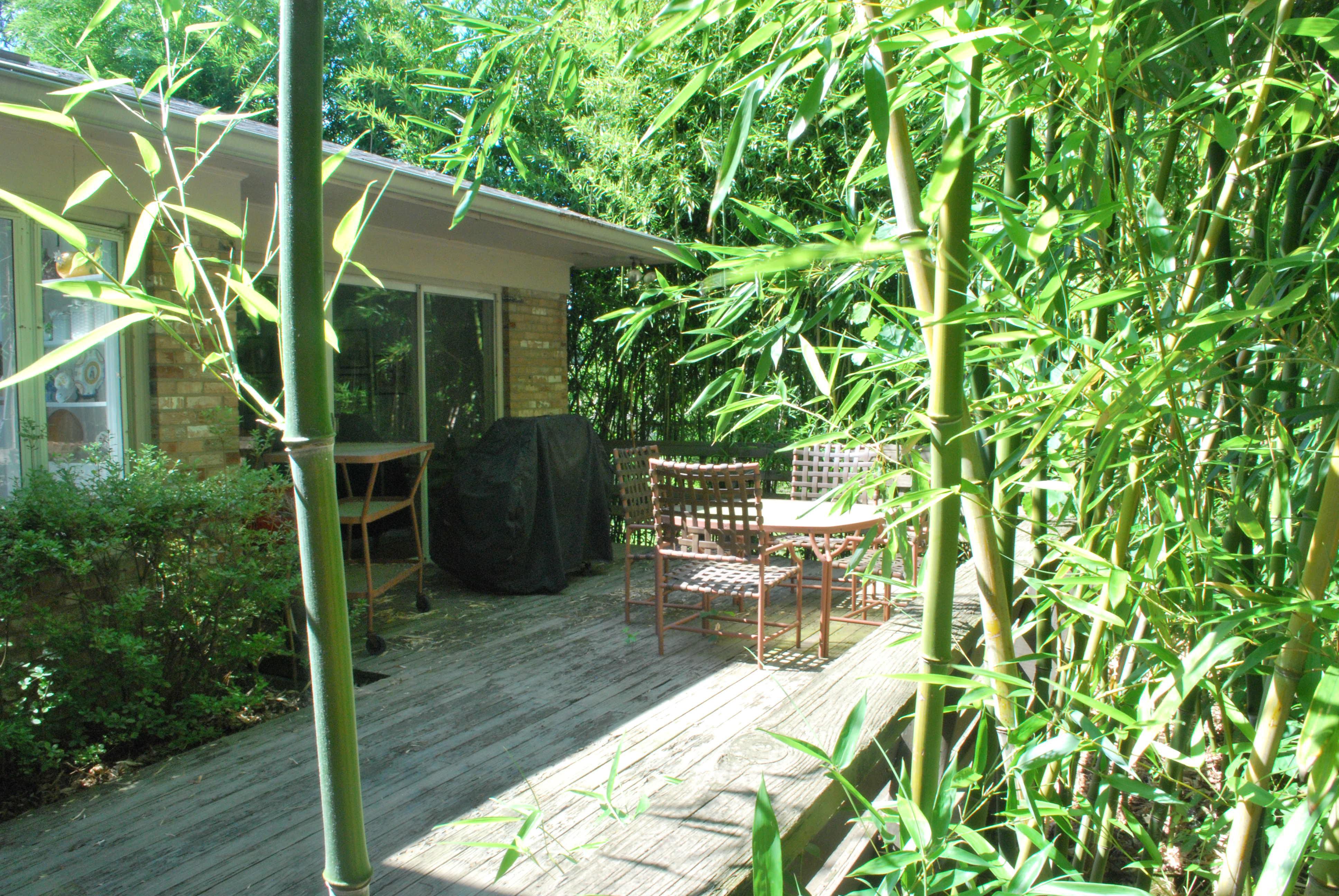 Backyard Deck with Plants   Invasive Bamboo Species