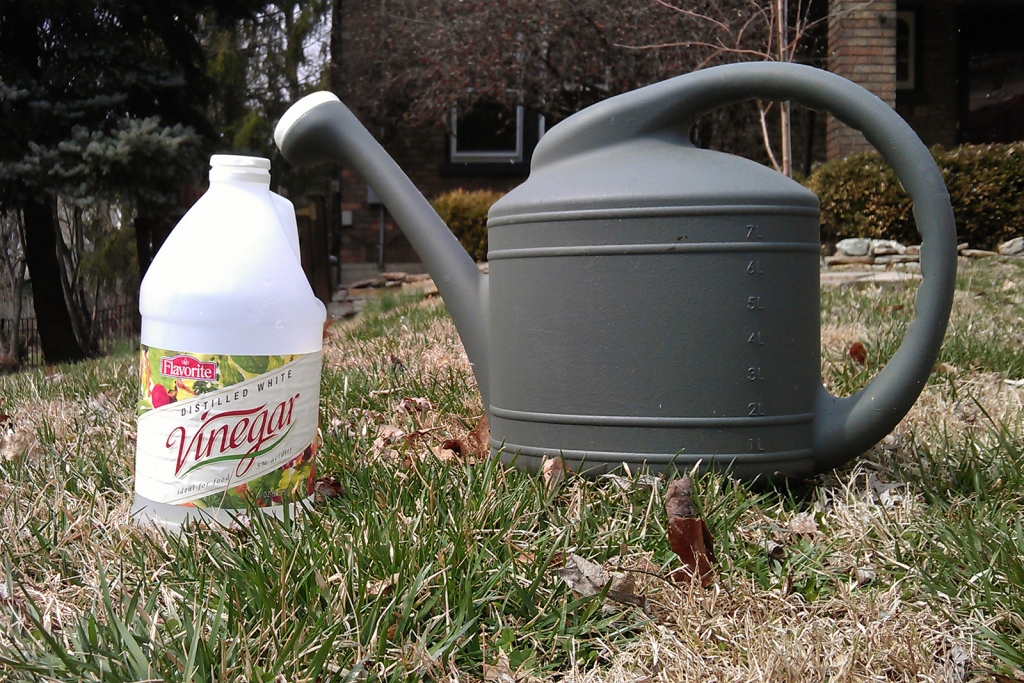 Using Vinegar to Dry Out Weeds | Organic Lawn Care