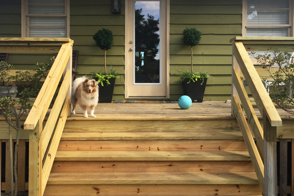 Collie dog on unfinished wood deck of green house