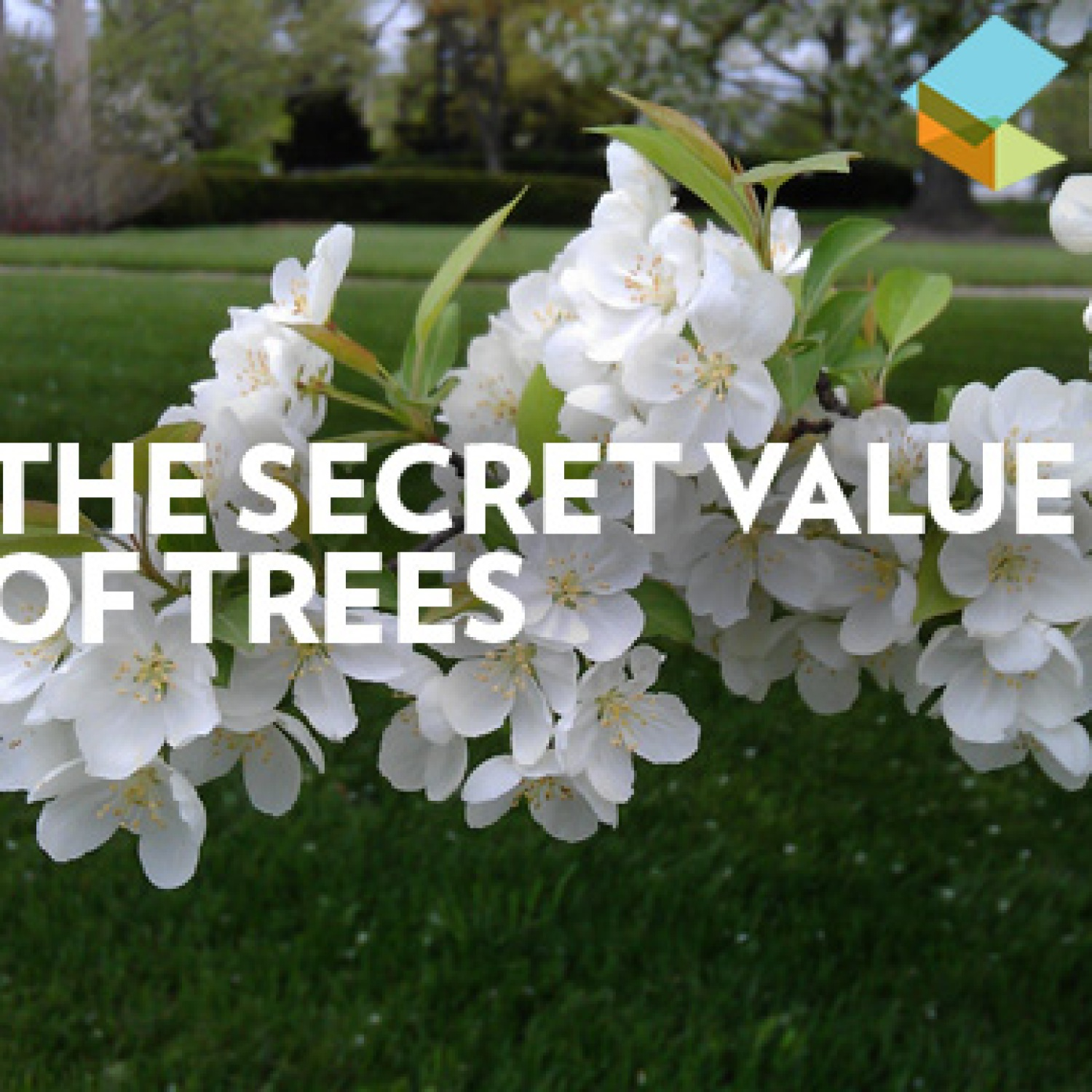 The Secret Value of Trees video still