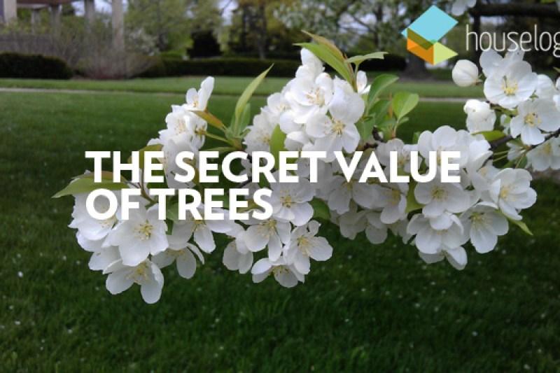 The Secret Value of Trees video still