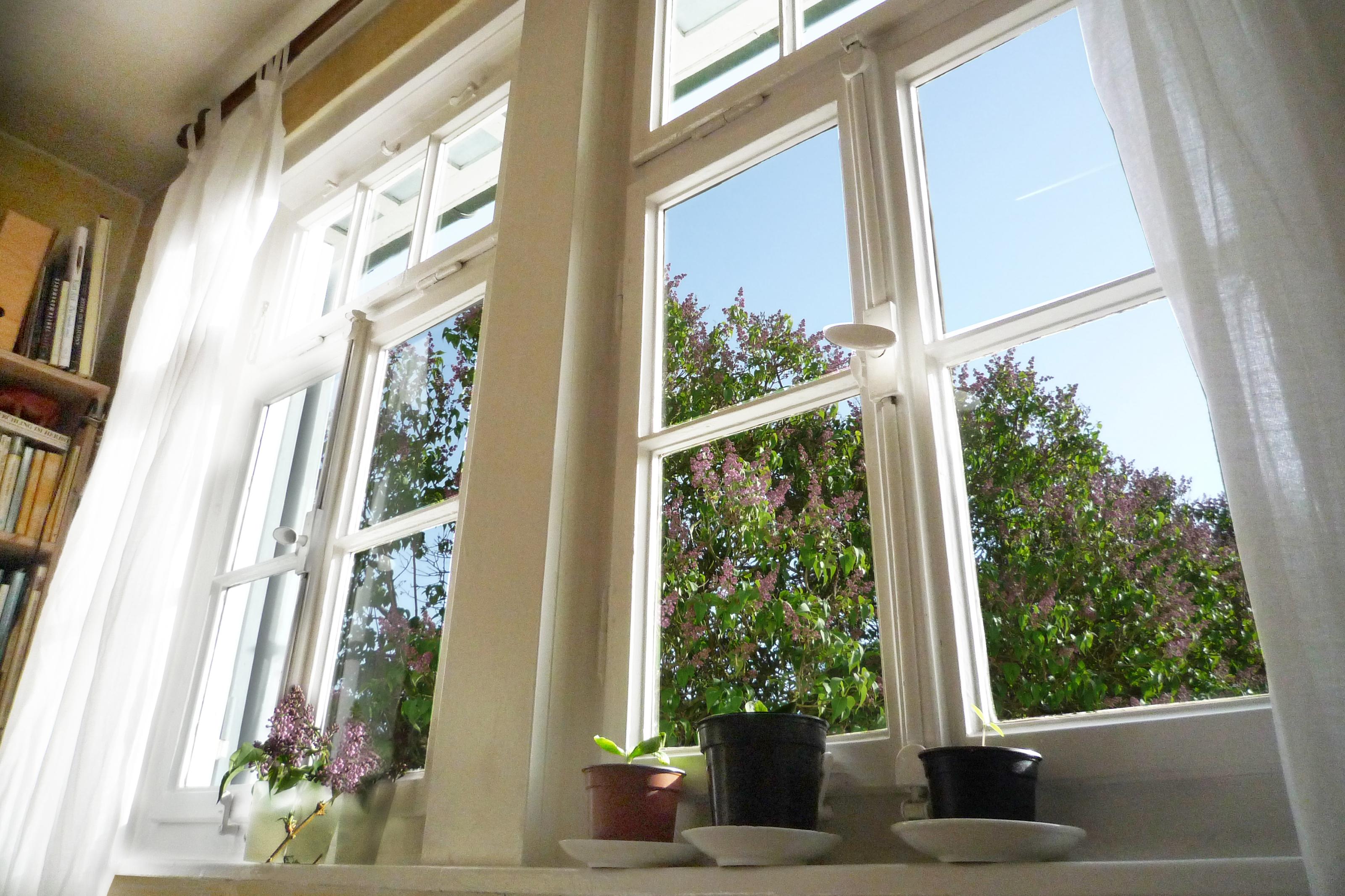 A sunny window in the springtime