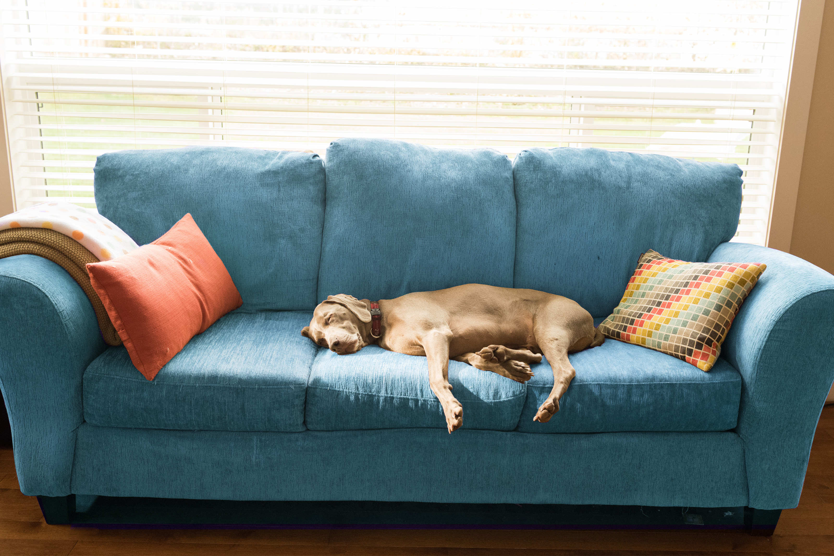 Dog sleeping on the couch