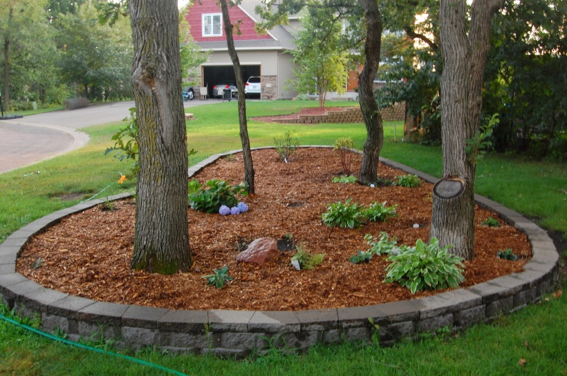 A raised mulched bed in grass