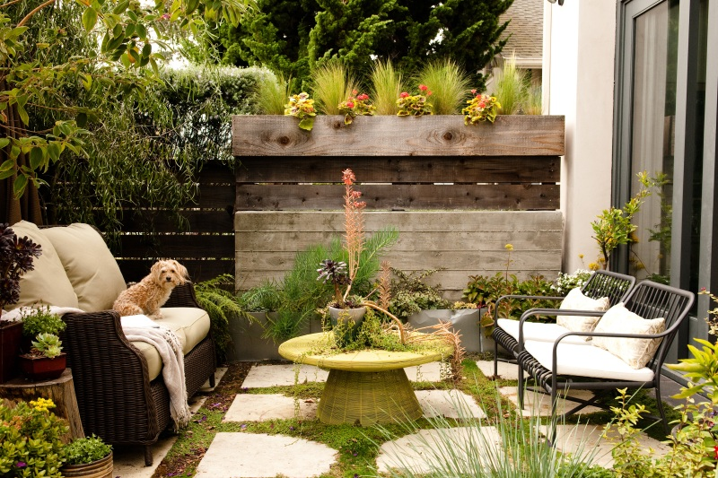 An outdoor space with patio furniture and a dog