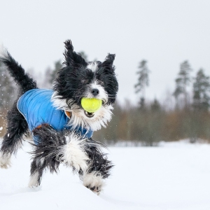 Dog frolicking in the snow