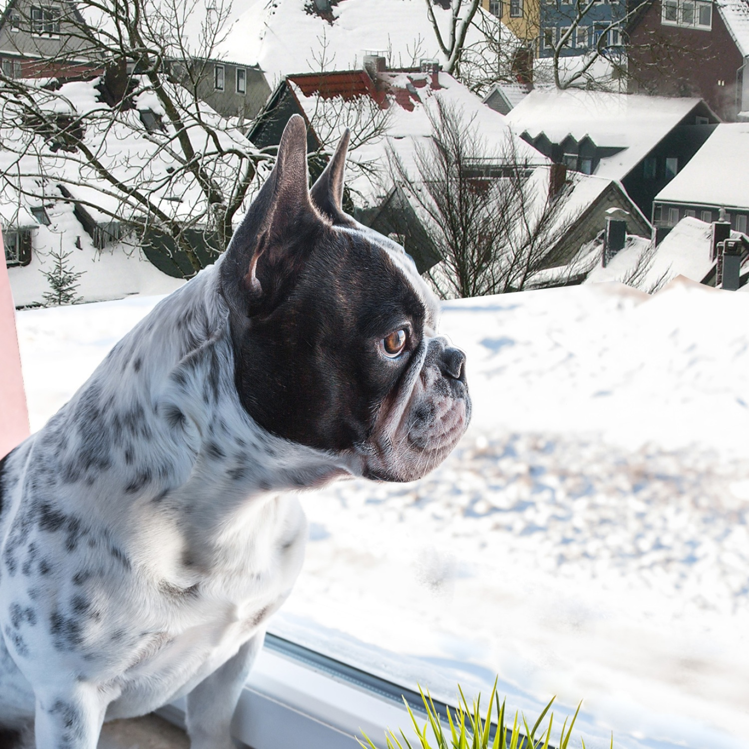 Dog looking out the window onto a snowy town