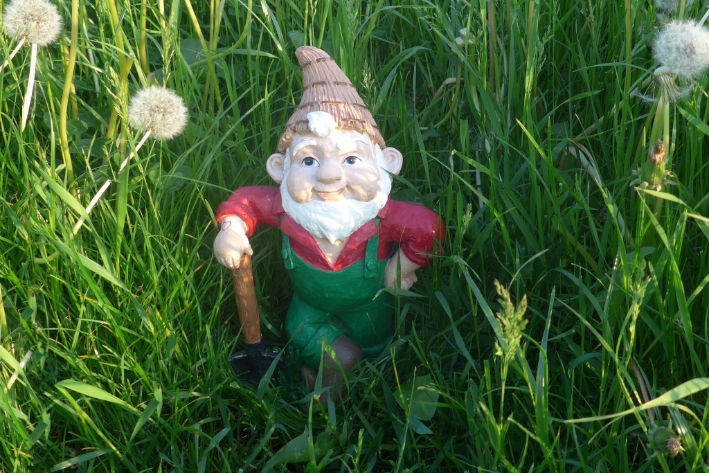 Garden gnome in tall grass
