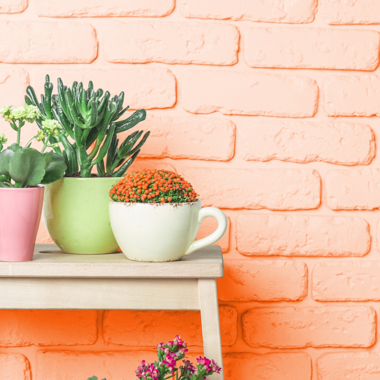 Orange brick wall with succulents