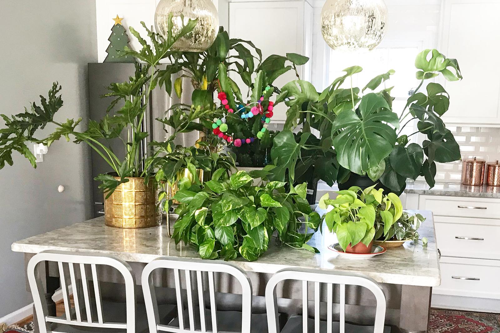 A few houseplants on a marble kitchen countertop