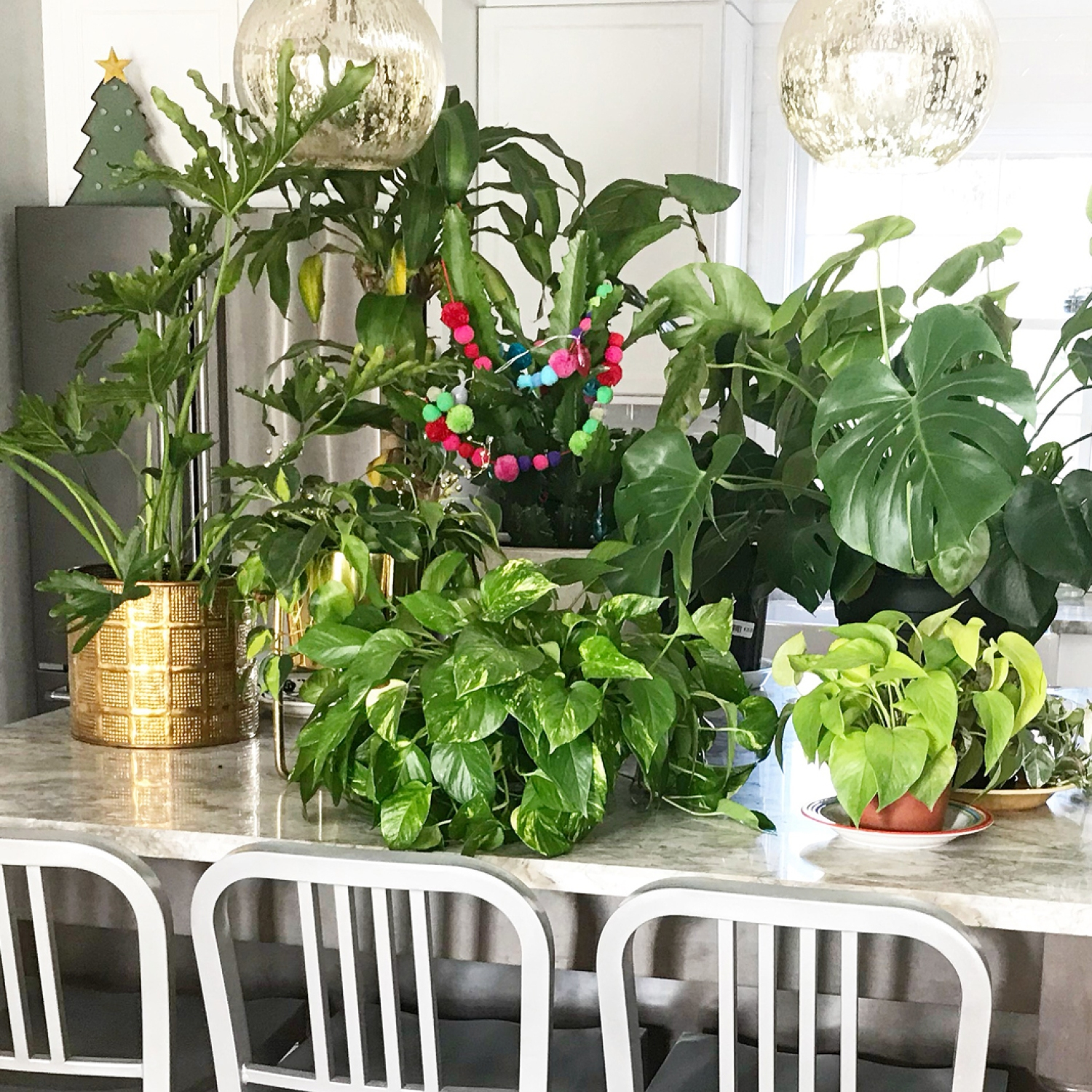 A few houseplants on a marble kitchen countertop