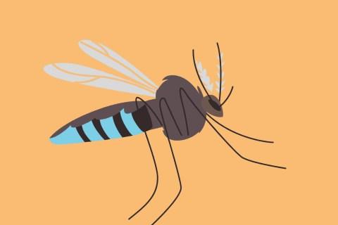 Annoying mosquito illustration