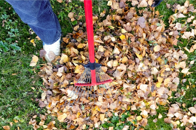 Overhead shot of raking fall leaves | fall yard clean up