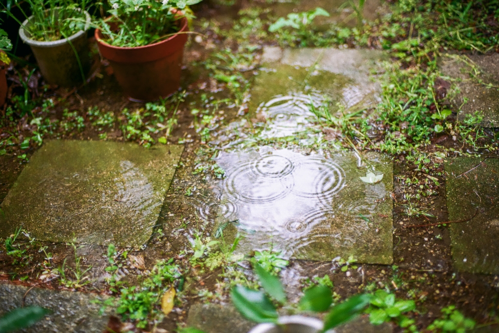 Rain drops in puddles on concrete pavers and potted plants