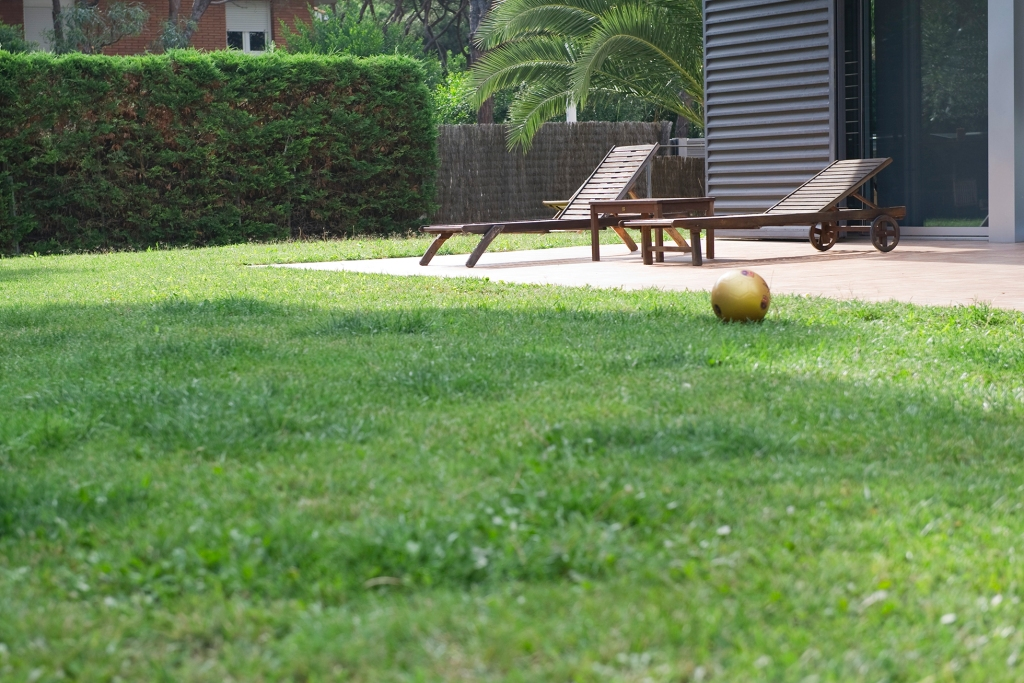 Water your lawn at the best time of day