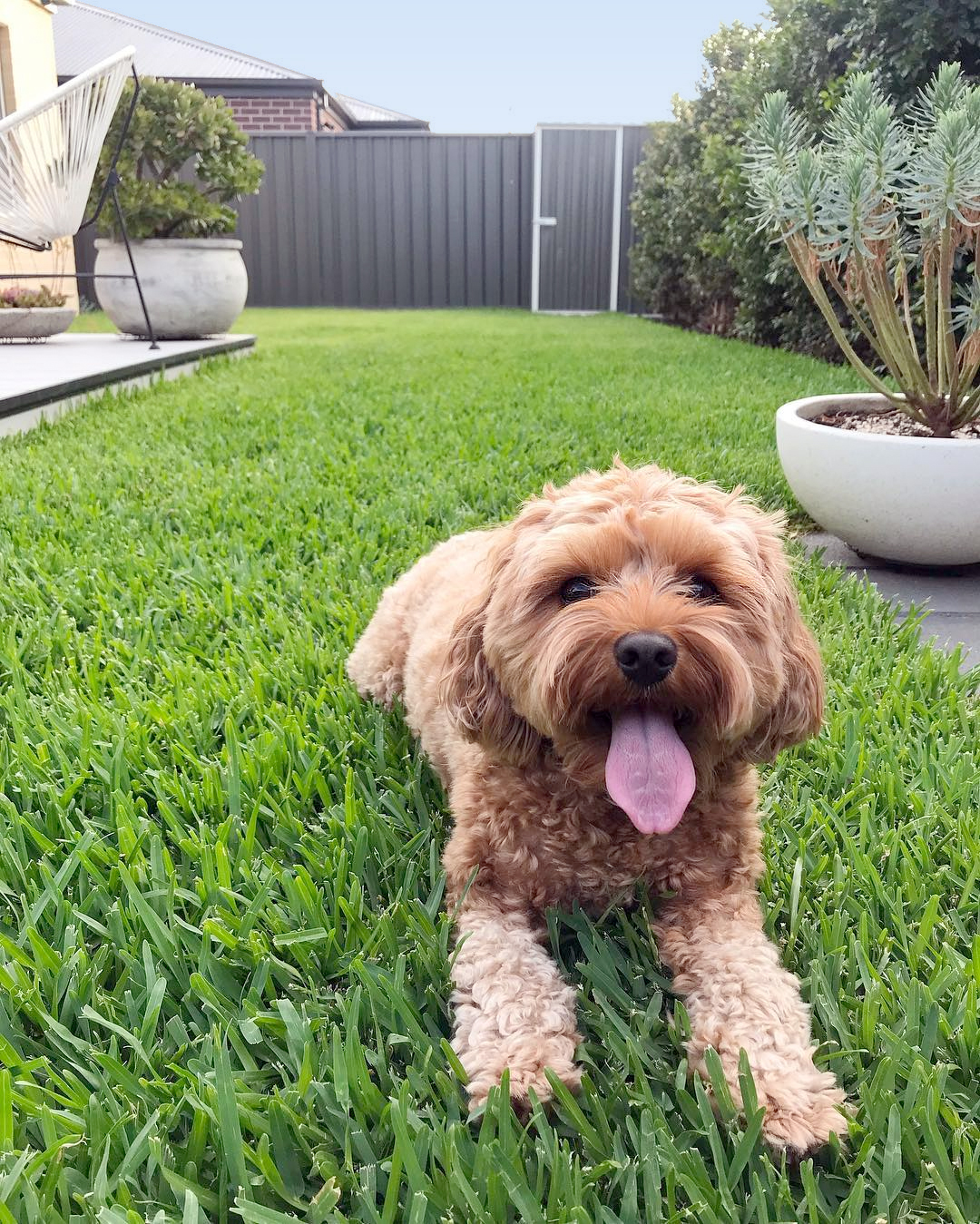 Landscaping for Dogs  HouseLogic Dog-Friendly Landscaping