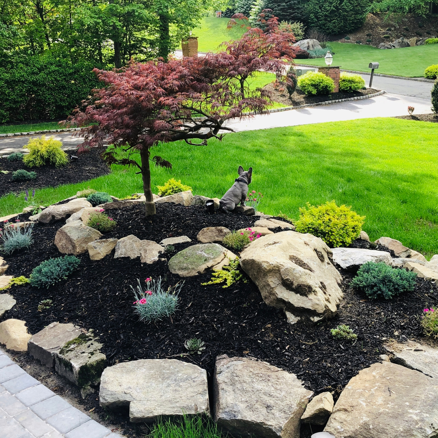 Spring front yard with small tree, and mulched flower bed