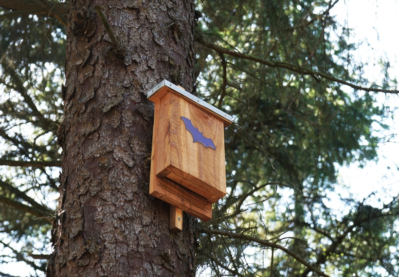 Bat box on a tree