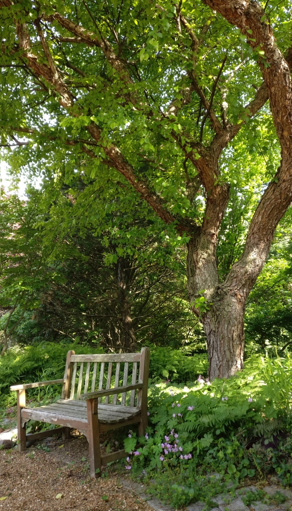 Shade tree behind home with bench